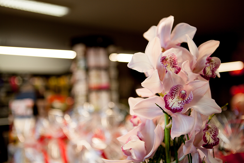 entretenir une orchid e het viooltje. Black Bedroom Furniture Sets. Home Design Ideas